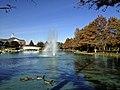 Duck Pond, Dallas Baptist University.jpg