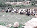 Ducks 20190401 172701.jpg