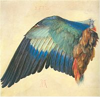 Duerer wing of a blue roller.jpg