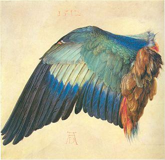 Timeline of ornithology - Wing of a European Roller, Albrecht Dürer, 1512
