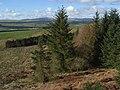 Dundoran Plantation - geograph.org.uk - 351457.jpg