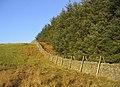 Dyke and plantation edge - geograph.org.uk - 297643.jpg