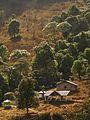 Dzukou Valley Base Camp IMG 8491.jpg