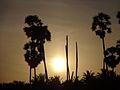 Early Morning @ Palakulam.jpg