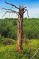 East Branch Swamp Natural Area (7) (9080311323).jpg