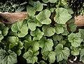 Eddie's Garden (20221452220).jpg