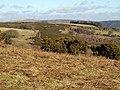 Edge of Holne Moor - geograph.org.uk - 1180658.jpg