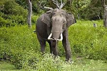 3. Elephant