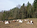 Elevage à Malplaquet (Bas-Rhin) (2).jpg