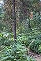 Emerald Lake IMG 5114.JPG
