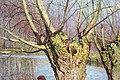 Emile claus, la raccolta delle nasse, 1893, 02.jpg