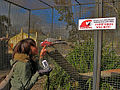 Eolophus roseicapilla -Drayton Manor Theme Park, Staffordshire, England -aviary-8a.jpg