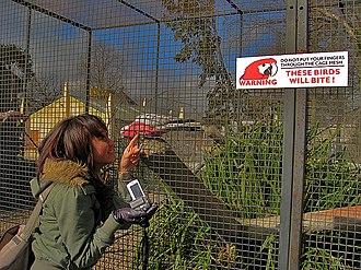 Drayton Manor Theme Park - Drayton Manor Zoo