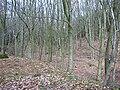 Ernocroft Wood - geograph.org.uk - 40679.jpg