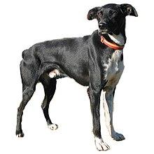 Eurohound Wikipedia