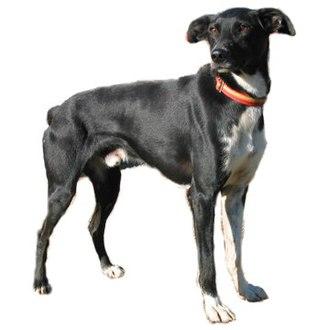 Eurohound - Eurohound
