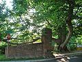 European Beech Tree, West Hill, West Hartford, CT - May 30, 2015.jpg
