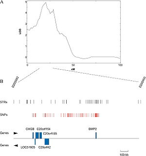 Quantitative trait locus - A QTL for osteoporosis on the human chromosome 20