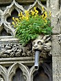 External detail on Our Lady and the English Martyrs Church in Cambridge.jpg