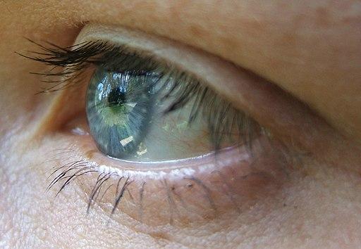 Die Hornhaut in der äußeren Augenhaut