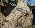 Eye painted platanum trunk.jpg