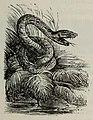 Fábulas de Samaniego (1882) (page 39 crop).jpg