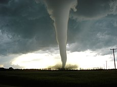 A funnel cloud touching down in the middle of a small stand of pine trees