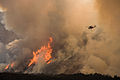 FEMA - 33306 - Helicopters drop fire retardant on the Harris fire in California.jpg