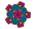 Fako virus PDB 6DJY.png