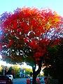 Fall Foliage in Maple Bluff - panoramio.jpg