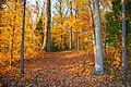 Fall at Staunton River State Park near point (15341911739).jpg