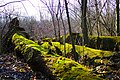 Fallen Logs along the Bugline Trail - panoramio.jpg