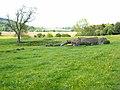 Fallen tree in Weardale - geograph.org.uk - 452420.jpg
