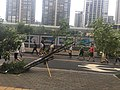 Fallen trees in Shenzhen due to 2018 Typhoon Mangkhut 06.jpg