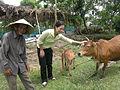 Farming. Vietnam 2007. Photo- Paul Kelly - AusAID (10694827026).jpg