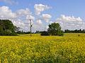 Farmland, Hurst - geograph.org.uk - 813773.jpg
