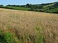 Farmland, Saunderton - geograph.org.uk - 957351.jpg