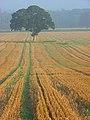 Farmland, Temple - geograph.org.uk - 988398.jpg