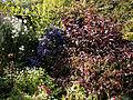 Feeringbury Manor shrub and flower border at Feering Essex England.jpg
