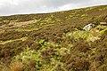 Fellside behind hut - geograph.org.uk - 846839.jpg