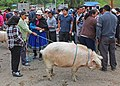 Feria de ganado, Biblián 04.jpg