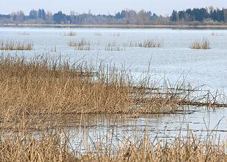 Fern Ridge Wildlife Area - Wetlands in the wildlife area