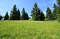 Fichtelbergwiesen im Erzgebirge, Sachsen...2H1A0380WI.jpg