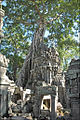 Ficus dans le temple Ta Prohm (Angkor) (6990987119).jpg