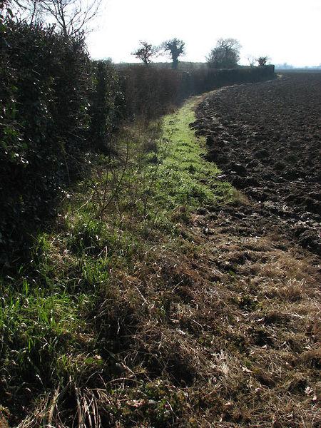 File:Field boundary - geograph.org.uk - 683943.jpg