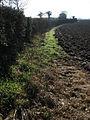 Field boundary - geograph.org.uk - 683943.jpg