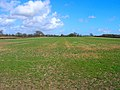 Field near Morley Farm - geograph.org.uk - 145179.jpg