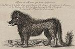 La Bête du Gévaudan, telle que certains l'imaginaient en 1764: mi-ourson, mi-loup.