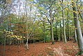 Five Hundred Acre Wood - geograph.org.uk - 1585002.jpg