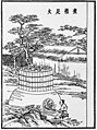 Five Steps of Papermaking - Step 2 - Boiling the Bamboo - As described by Cai Lun in 105 CE.jpg